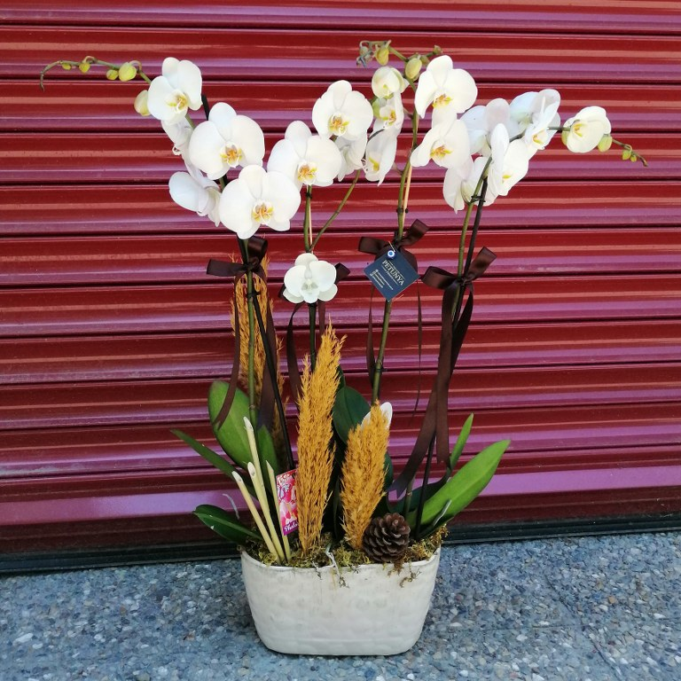 4 lü Orkide