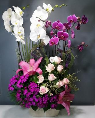 4'lü Orkide Aranjman