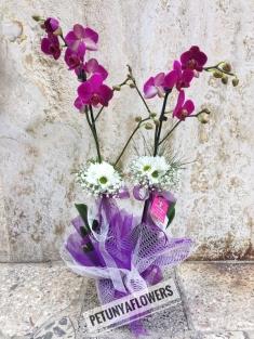Mor Orkide 2 li